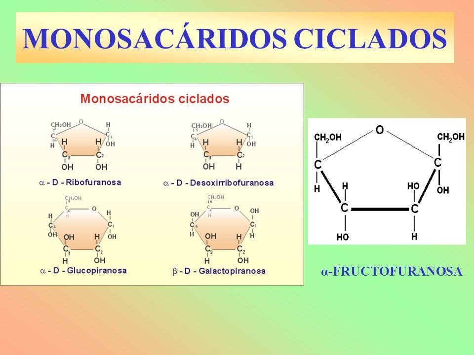 MONOSACÁRIDOS CICLADOS