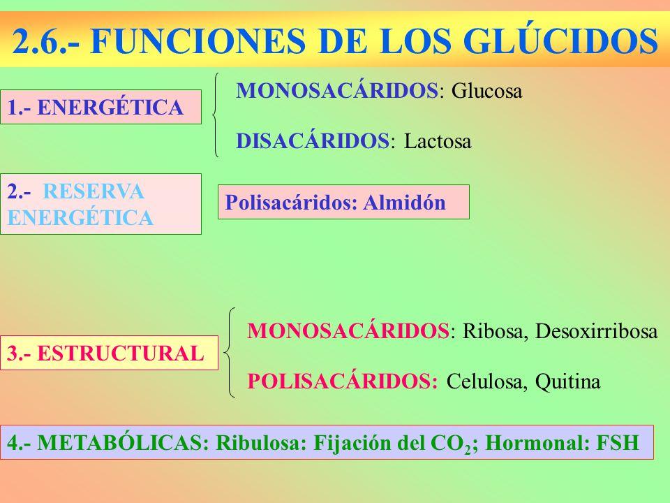 2.6.- FUNCIONES DE LOS GLÚCIDOS