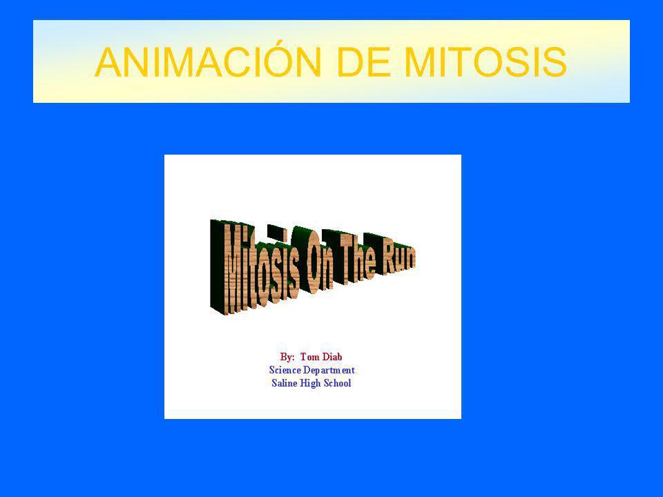 ANIMACIÓN DE MITOSIS