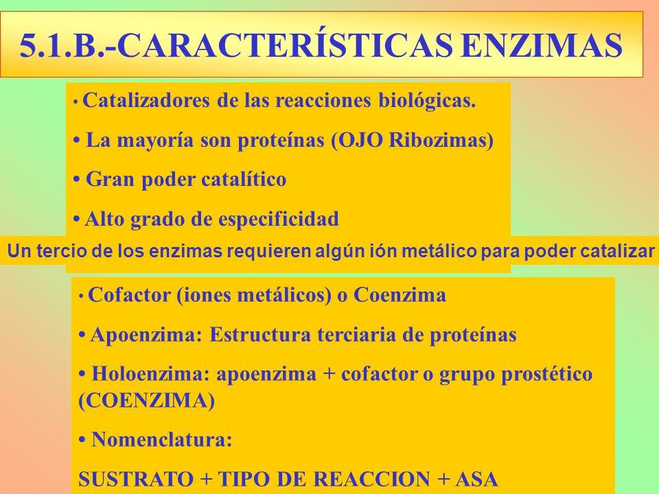 5.1.B.-CARACTERÍSTICAS ENZIMAS