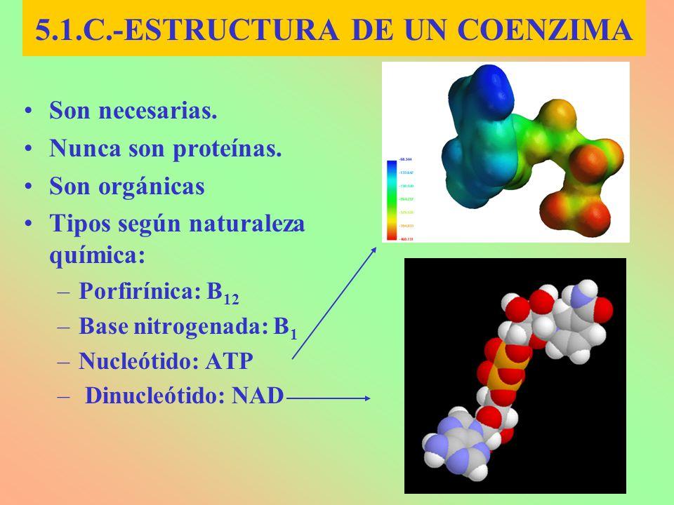 5.1.C.-ESTRUCTURA DE UN COENZIMA