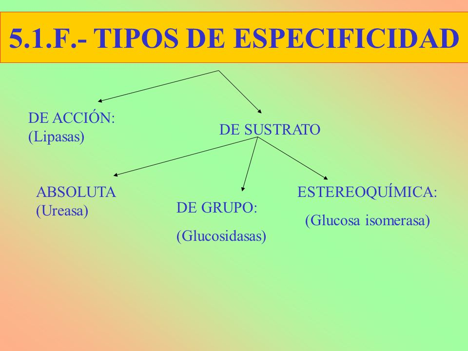 5.1.F.- TIPOS DE ESPECIFICIDAD