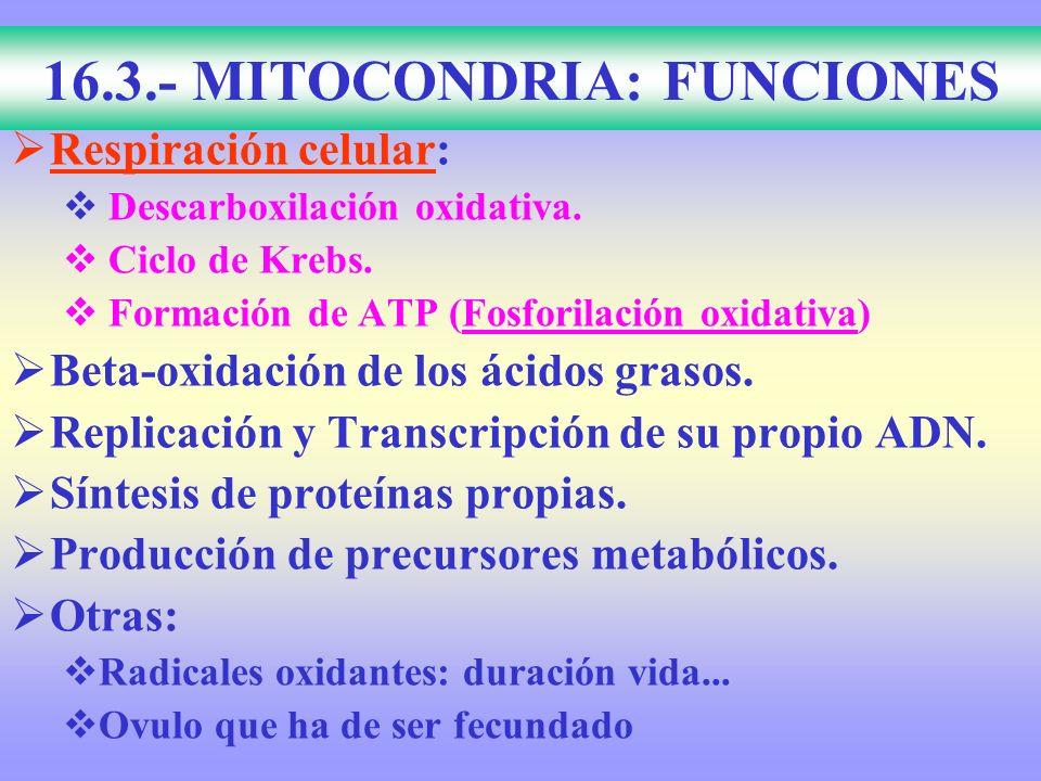 16.3.- MITOCONDRIA: FUNCIONES