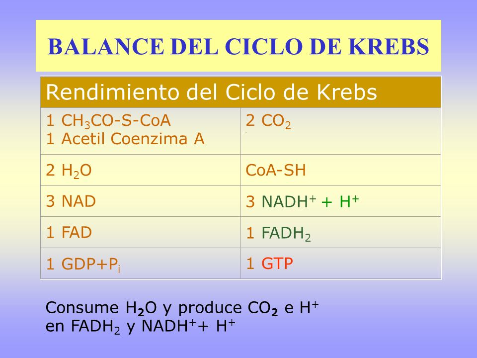 BALANCE DEL CICLO DE KREBS
