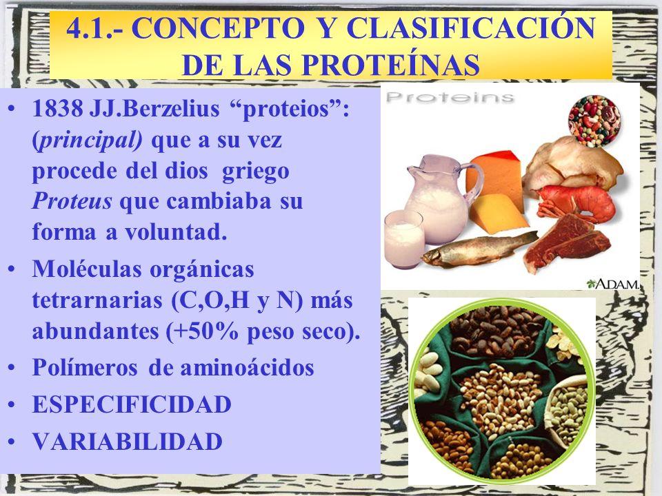 4.1.- CONCEPTO Y CLASIFICACIÓN DE LAS PROTEÍNAS