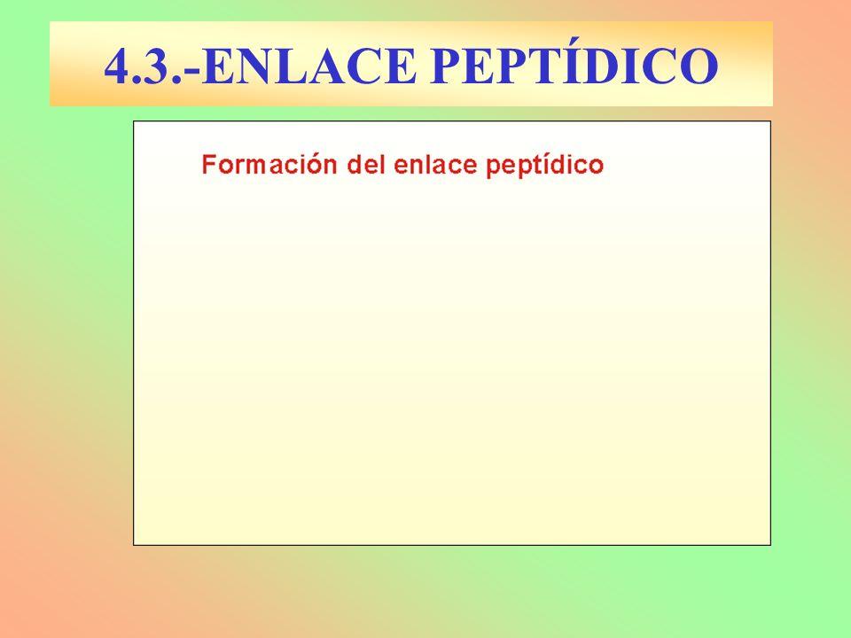 4.3.-ENLACE PEPTÍDICO