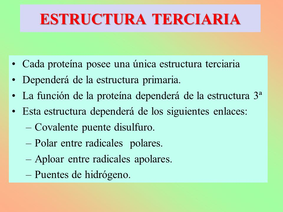 ESTRUCTURA TERCIARIA Cada proteína posee una única estructura terciaria. Dependerá de la estructura primaria.