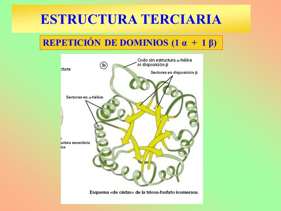 ESTRUCTURA TERCIARIA REPETICIÓN DE DOMINIOS (1 α + 1 β)