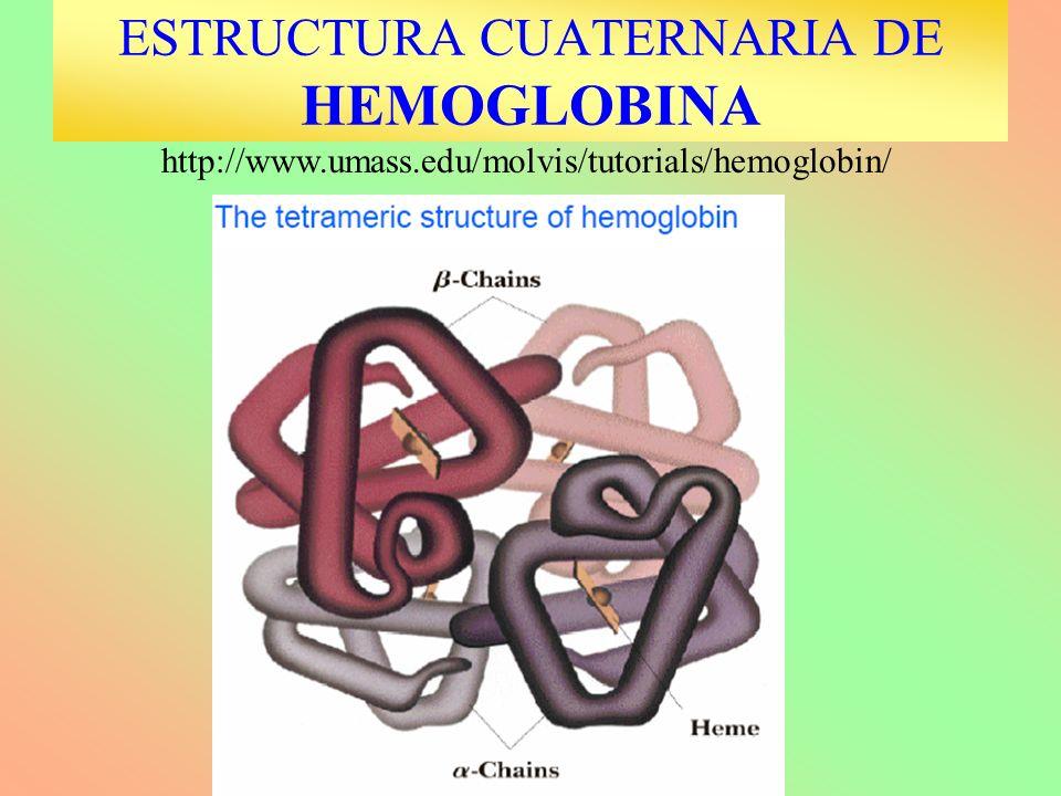 ESTRUCTURA CUATERNARIA DE HEMOGLOBINA