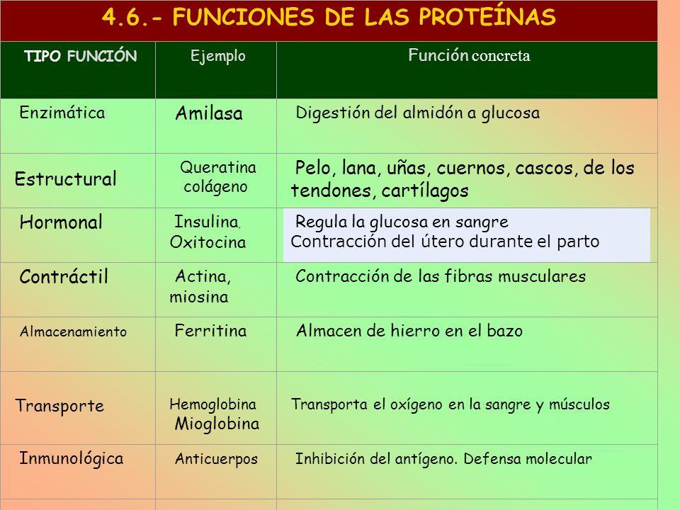 4.6.- FUNCIONES DE LAS PROTEÍNAS