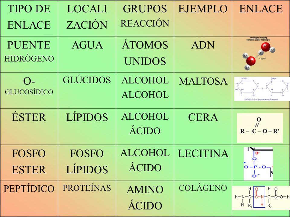 TIPO DE ENLACE LOCALI ZACIÓN GRUPOS EJEMPLO PUENTE AGUA ÁTOMOS UNIDOS