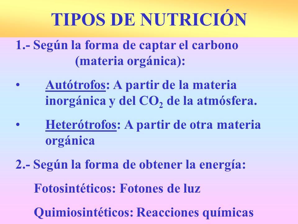 TIPOS DE NUTRICIÓN 1.- Según la forma de captar el carbono (materia orgánica):