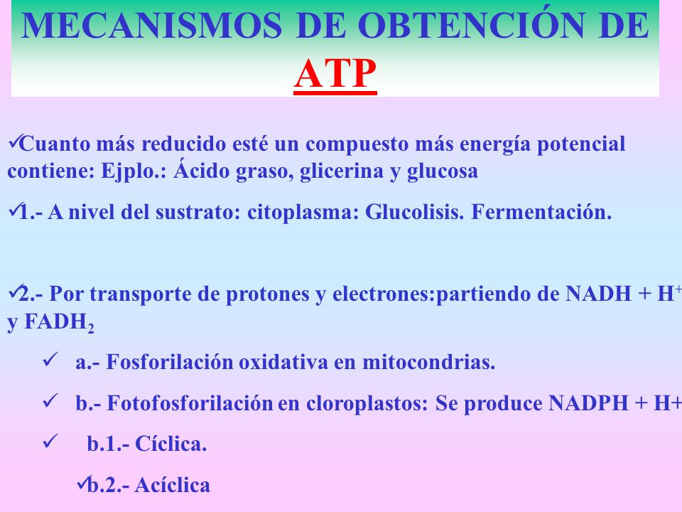 MECANISMOS DE OBTENCIÓN DE ATP