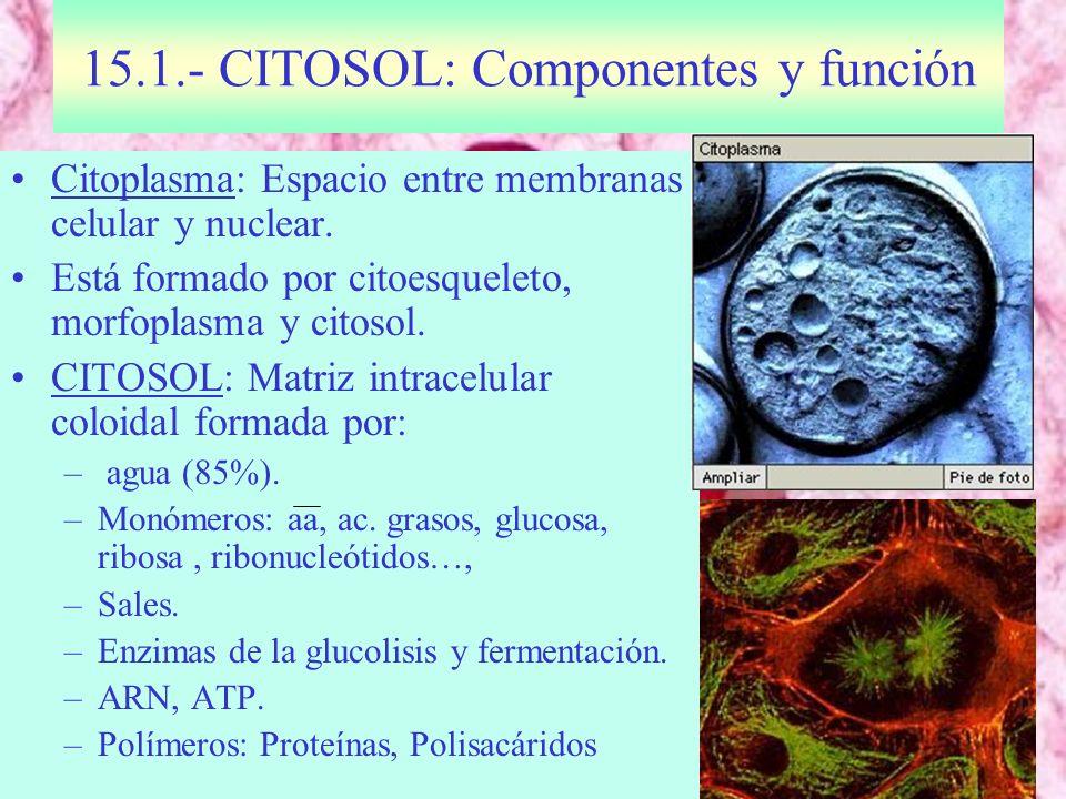 15.1.- CITOSOL: Componentes y función
