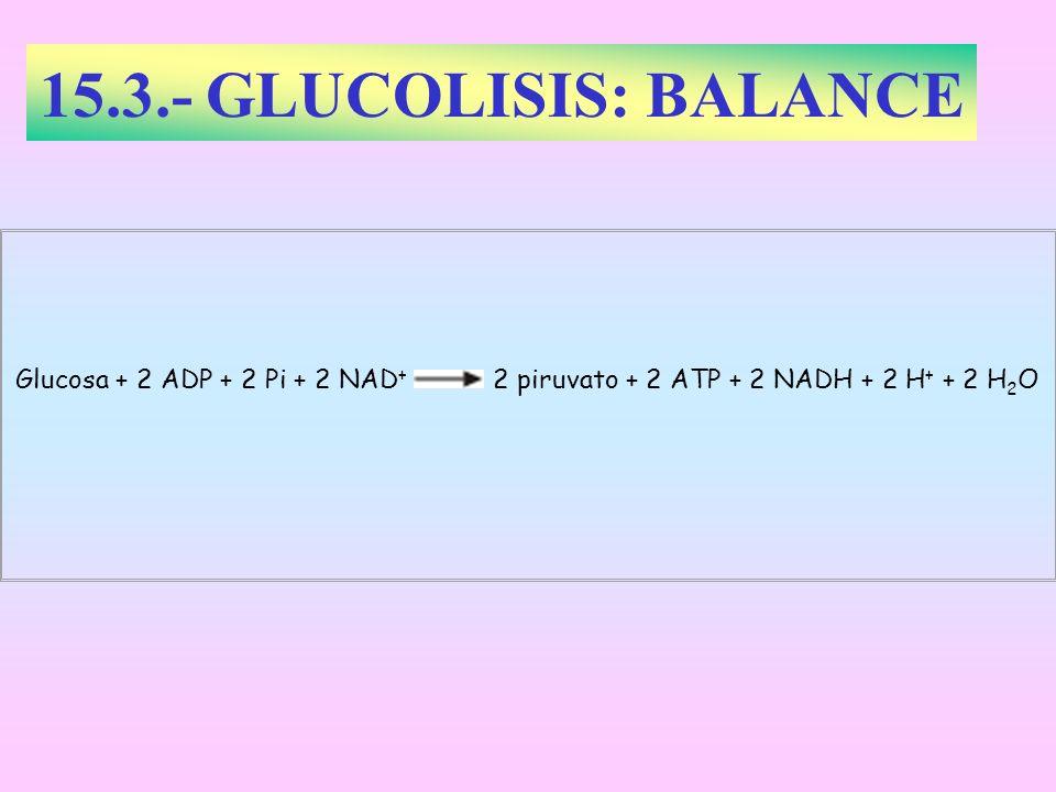 15.3.- GLUCOLISIS: BALANCEGlucosa + 2 ADP + 2 Pi + 2 NAD+ 2 piruvato + 2 ATP + 2 NADH + 2 H+ + 2 H2O.