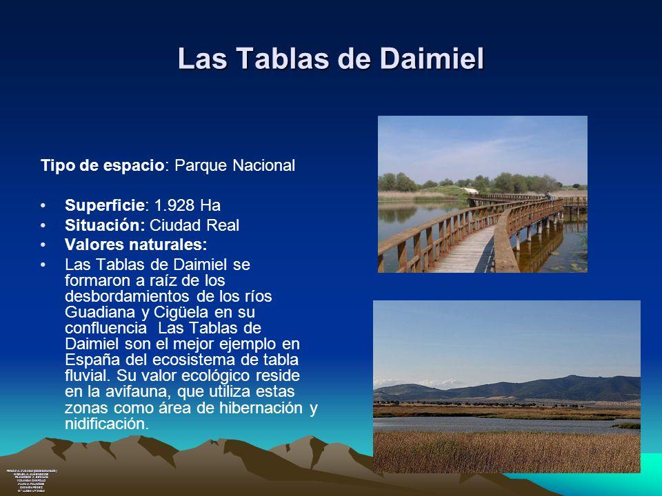 Las Tablas de Daimiel Tipo de espacio: Parque Nacional
