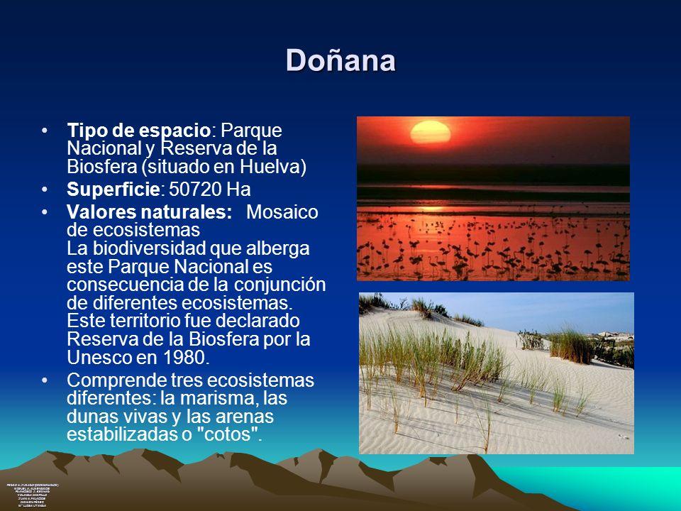 Doñana Tipo de espacio: Parque Nacional y Reserva de la Biosfera (situado en Huelva) Superficie: 50720 Ha.