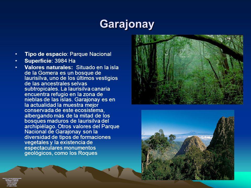 Garajonay Tipo de espacio: Parque Nacional Superficie: 3984 Ha