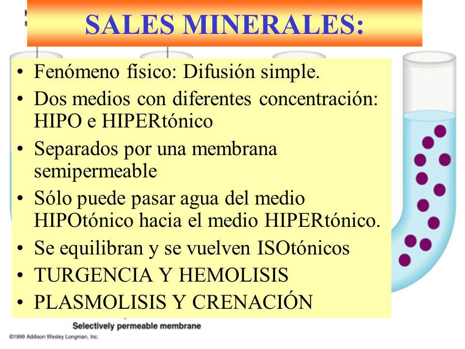 SALES MINERALES: Fenómeno físico: Difusión simple.