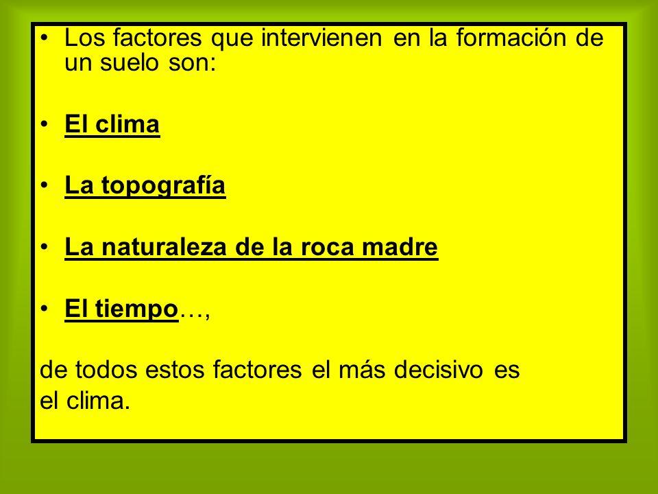 Los factores que intervienen en la formación de un suelo son: