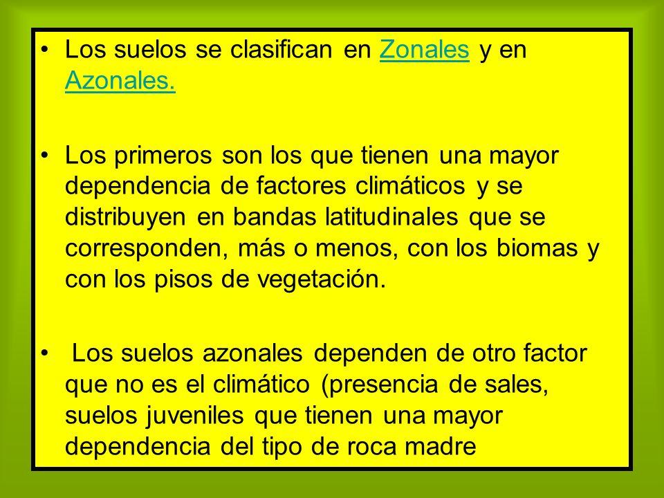 Los suelos se clasifican en Zonales y en Azonales.