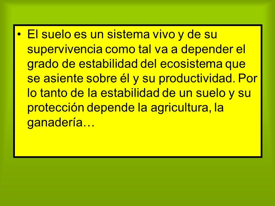 El suelo es un sistema vivo y de su supervivencia como tal va a depender el grado de estabilidad del ecosistema que se asiente sobre él y su productividad.