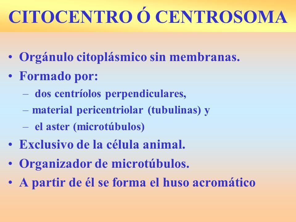 CITOCENTRO Ó CENTROSOMA