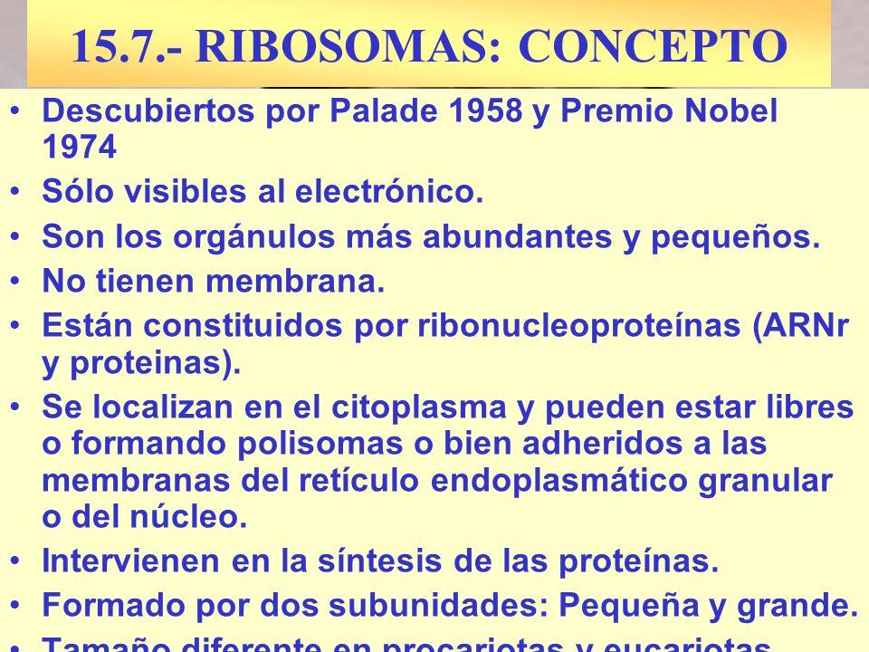 15.7.- RIBOSOMAS: CONCEPTO Descubiertos por Palade 1958 y Premio Nobel 1974. Sólo visibles al electrónico.
