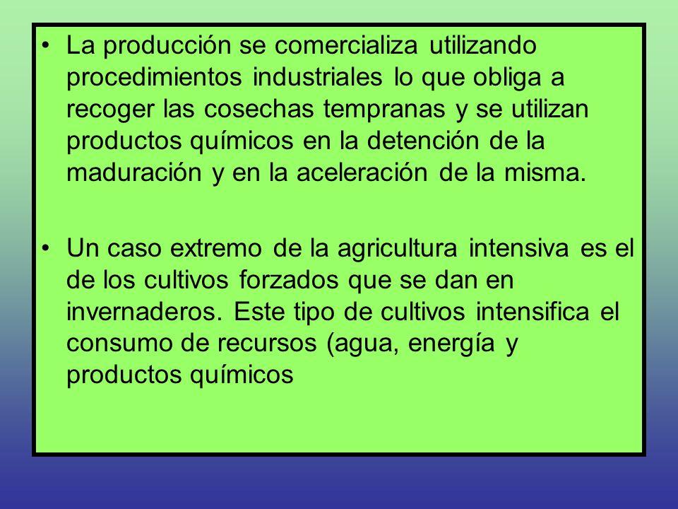 La producción se comercializa utilizando procedimientos industriales lo que obliga a recoger las cosechas tempranas y se utilizan productos químicos en la detención de la maduración y en la aceleración de la misma.