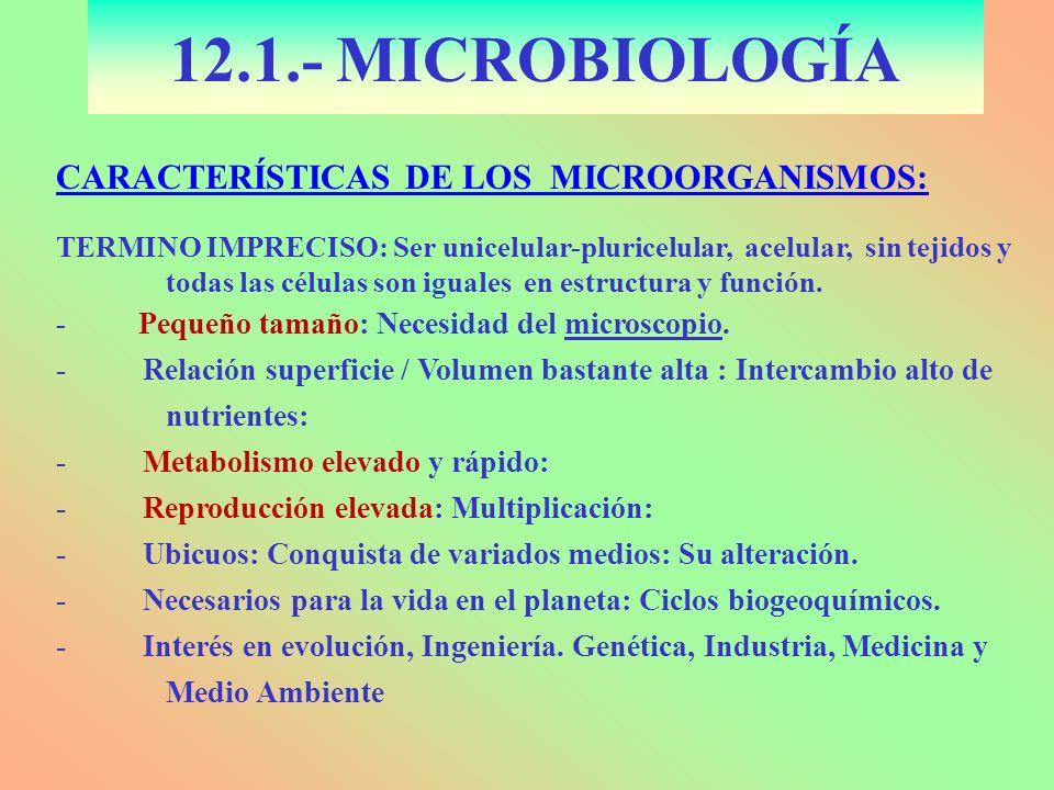 12.1.- MICROBIOLOGÍA CARACTERÍSTICAS DE LOS MICROORGANISMOS: