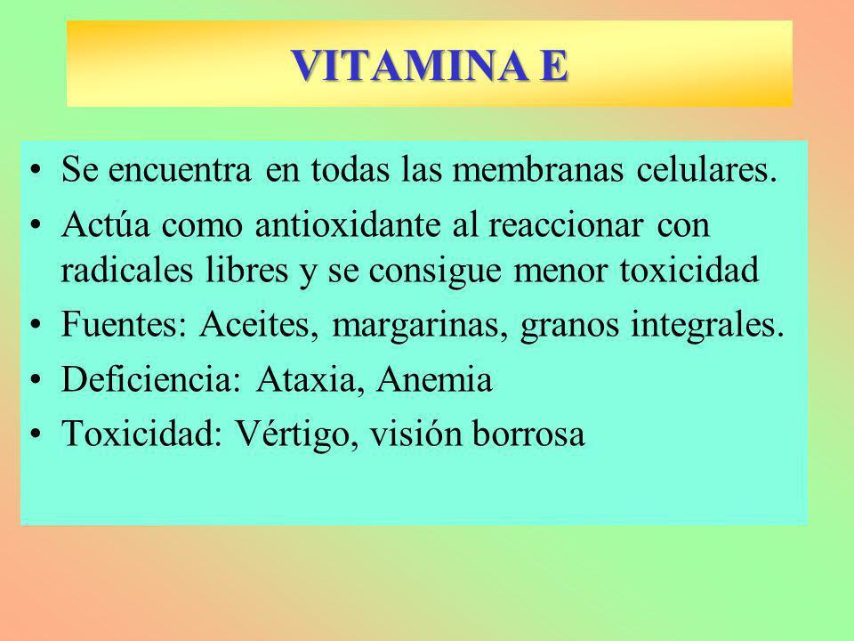 VITAMINA E Se encuentra en todas las membranas celulares.