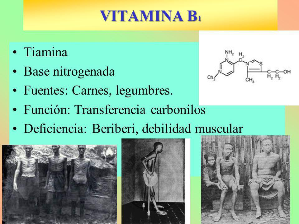 VITAMINA B1 Tiamina Base nitrogenada Fuentes: Carnes, legumbres.