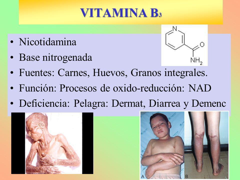 VITAMINA B3 Nicotidamina Base nitrogenada