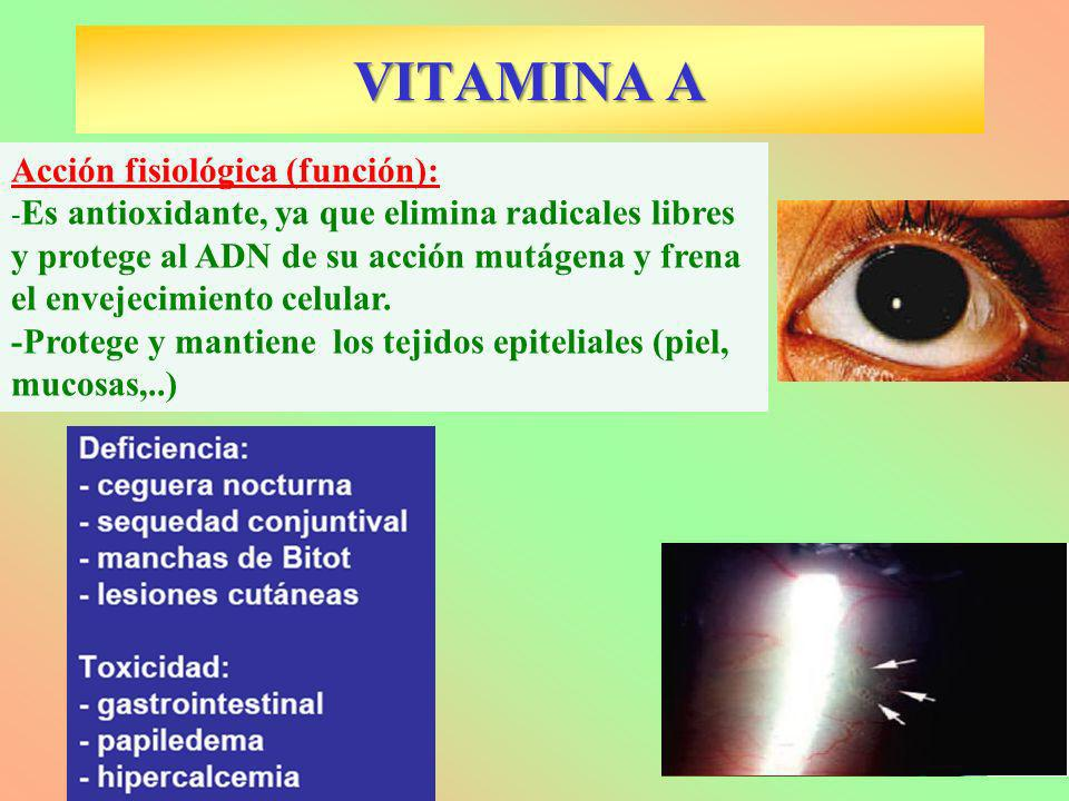 VITAMINA A Acción fisiológica (función):