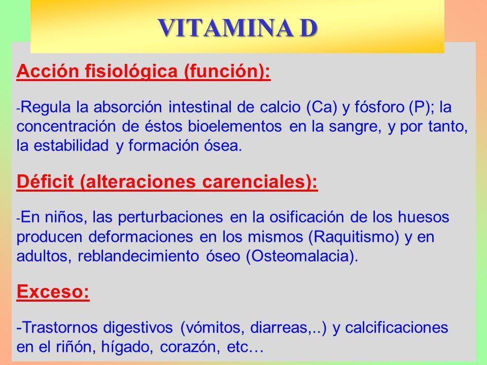 VITAMINA D Acción fisiológica (función):