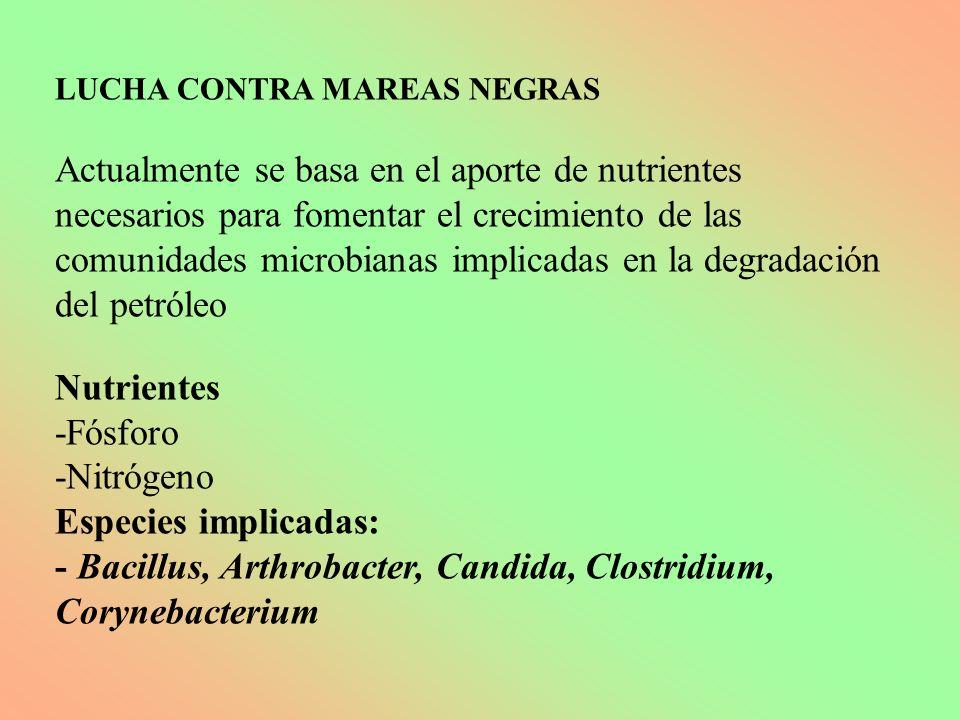 - Bacillus, Arthrobacter, Candida, Clostridium, Corynebacterium