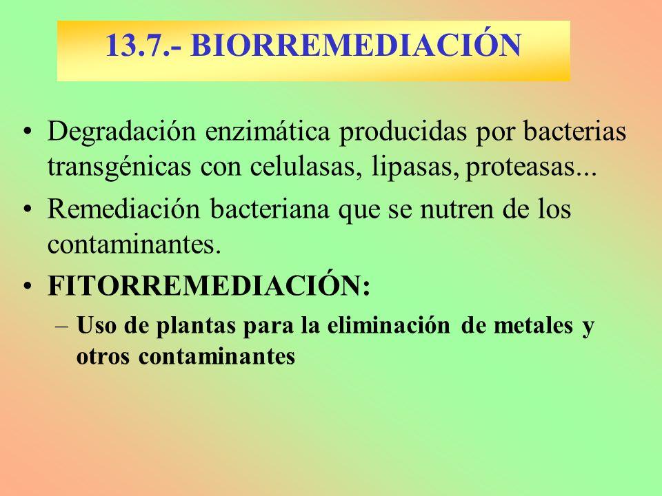 13.7.- BIORREMEDIACIÓN Degradación enzimática producidas por bacterias transgénicas con celulasas, lipasas, proteasas...