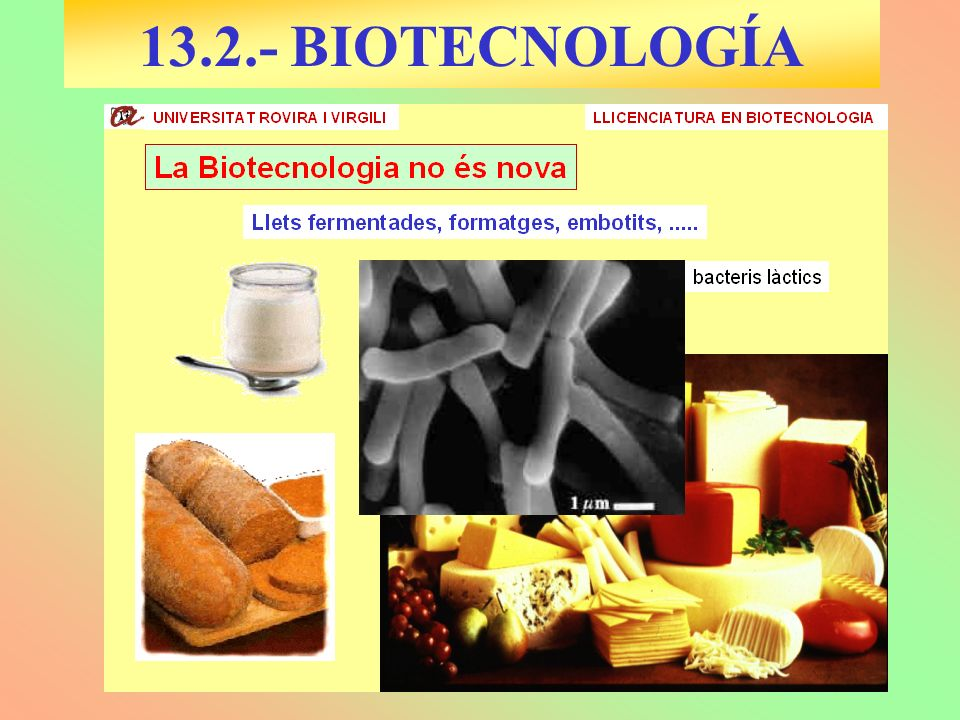 13.2.- BIOTECNOLOGÍA
