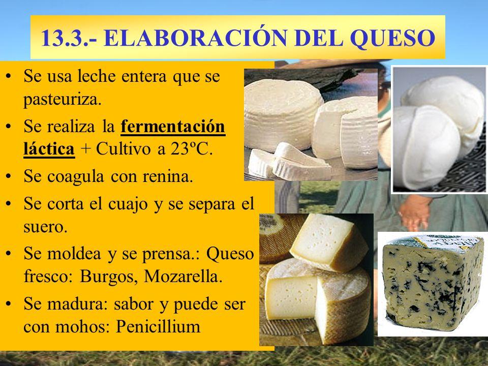 13.3.- ELABORACIÓN DEL QUESO