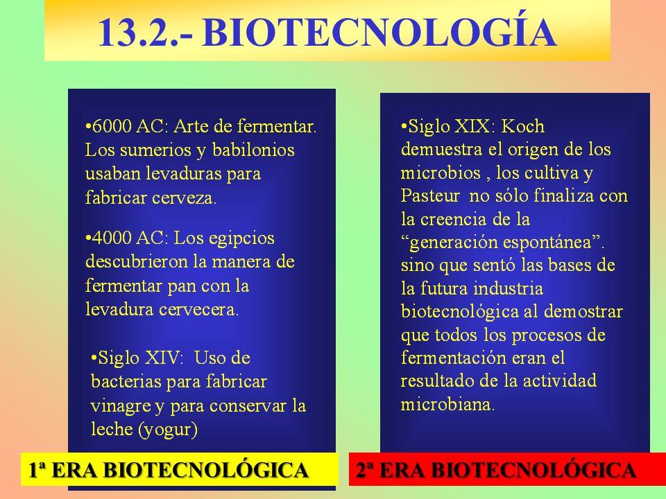 13.2.- BIOTECNOLOGÍA 1ª ERA BIOTECNOLÓGICA 2ª ERA BIOTECNOLÓGICA