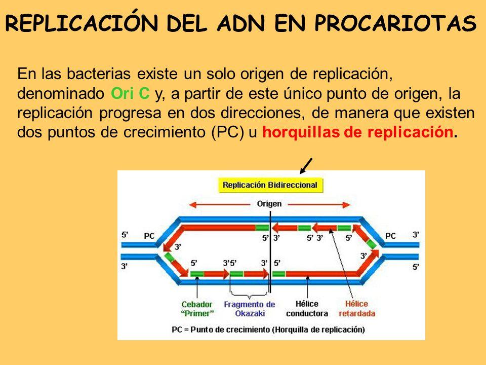 REPLICACIÓN DEL ADN EN PROCARIOTAS