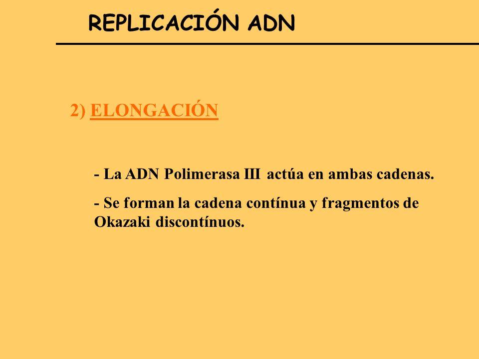 REPLICACIÓN ADN 2) ELONGACIÓN