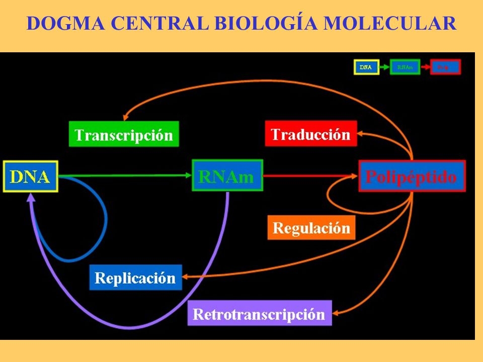 DOGMA CENTRAL BIOLOGÍA MOLECULAR