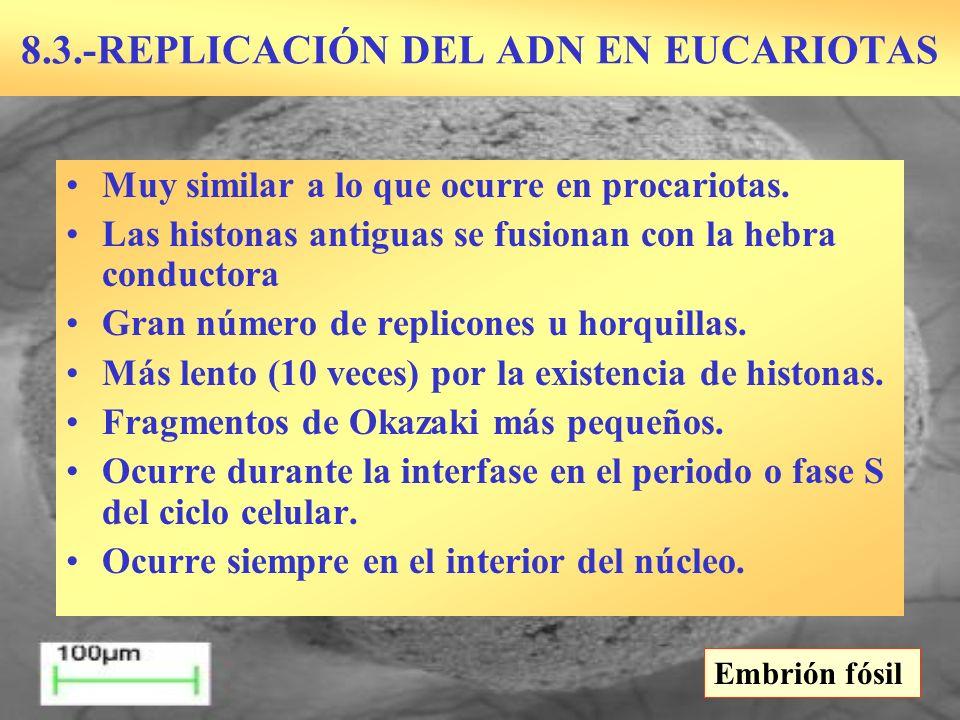 8.3.-REPLICACIÓN DEL ADN EN EUCARIOTAS