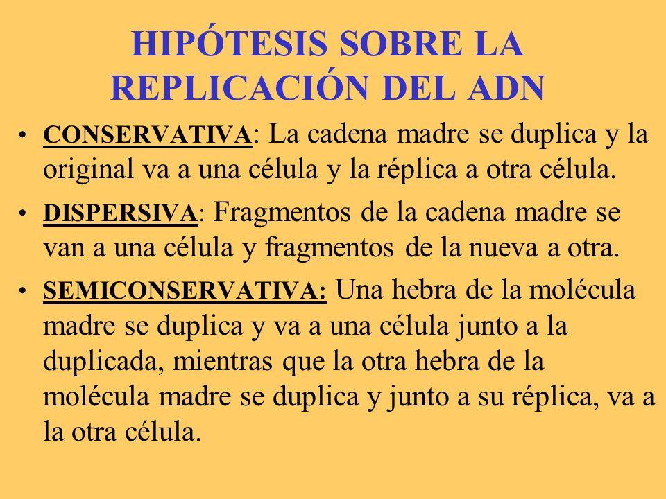 HIPÓTESIS SOBRE LA REPLICACIÓN DEL ADN