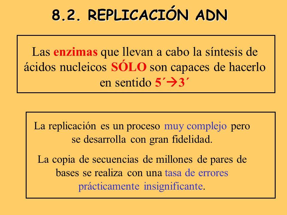 8.2. REPLICACIÓN ADN Las enzimas que llevan a cabo la síntesis de ácidos nucleicos SÓLO son capaces de hacerlo en sentido 5´3´