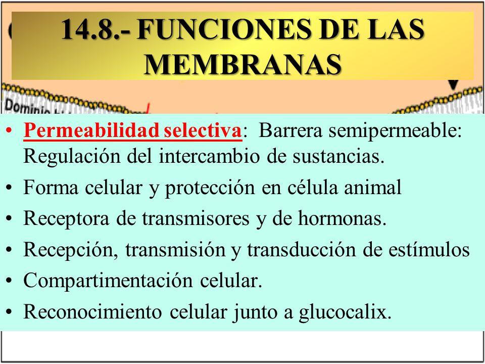 14.8.- FUNCIONES DE LAS MEMBRANAS