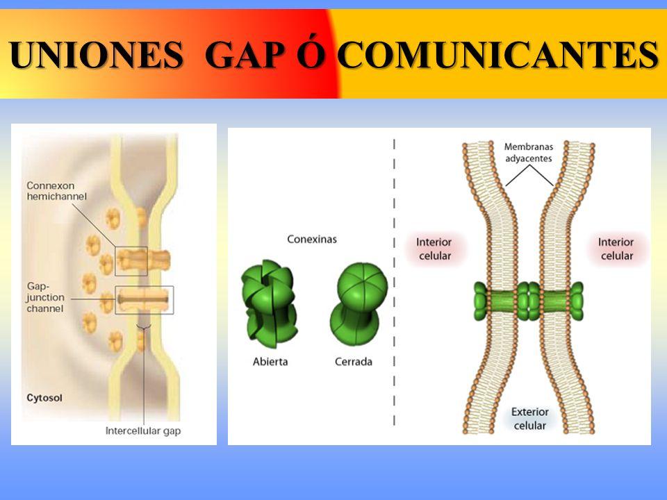 UNIONES GAP Ó COMUNICANTES