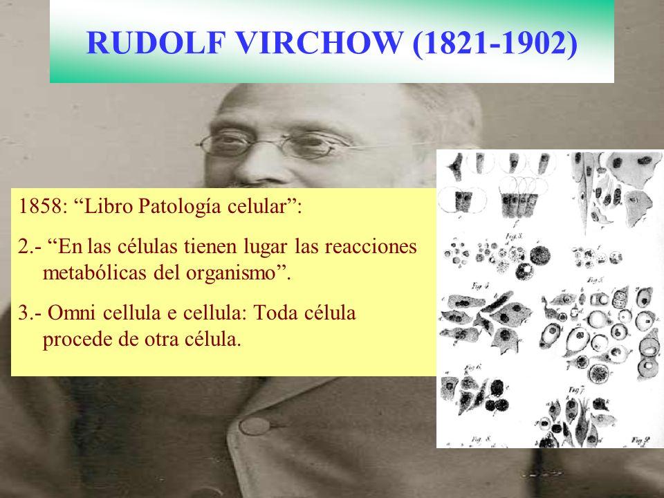 RUDOLF VIRCHOW (1821-1902) 1858: Libro Patología celular :