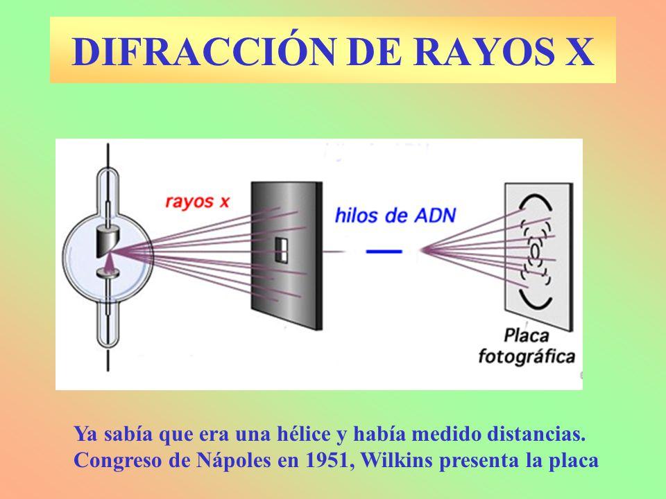 DIFRACCIÓN DE RAYOS X Ya sabía que era una hélice y había medido distancias.